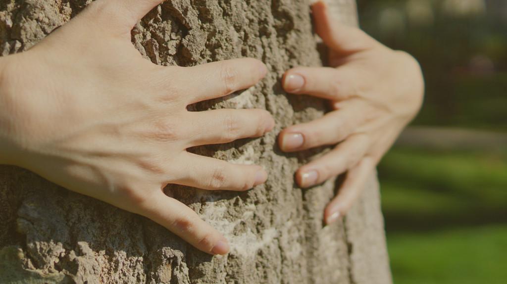 Plateforme I love trees