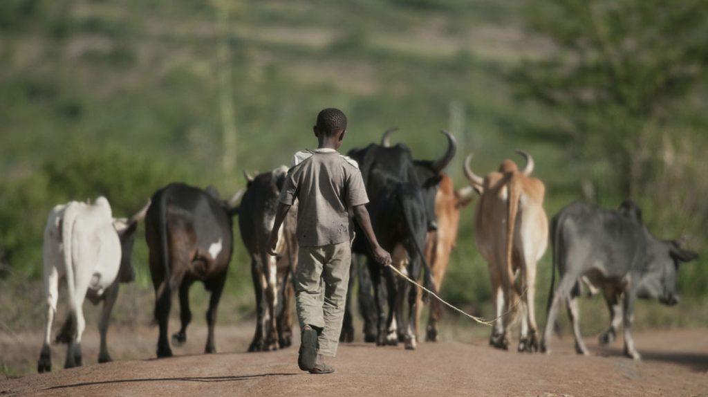 Plateforme digitale Food Security